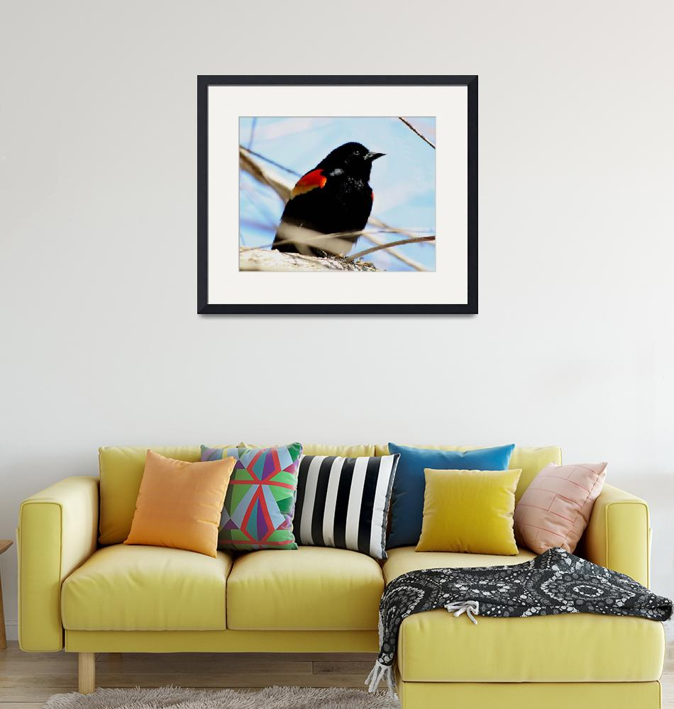 """Male Red Winged Blackbird""  (2009) by rayjacque"