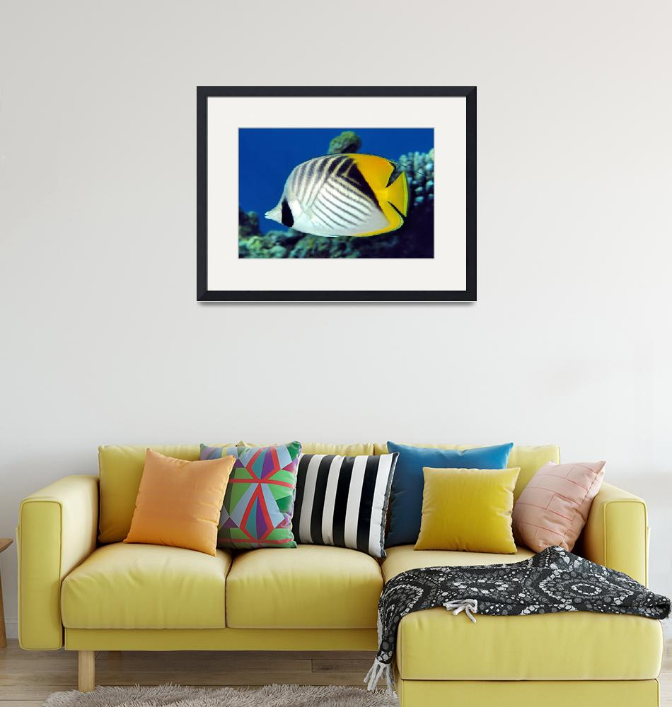 """""""Threadfin Butterflyfish""""  (2005) by JoaoPonces"""