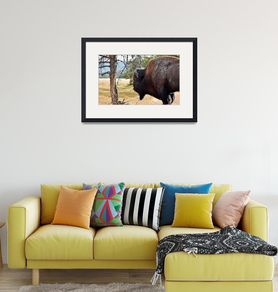 """Bull Bison""  (2014) by WindmillFarms"