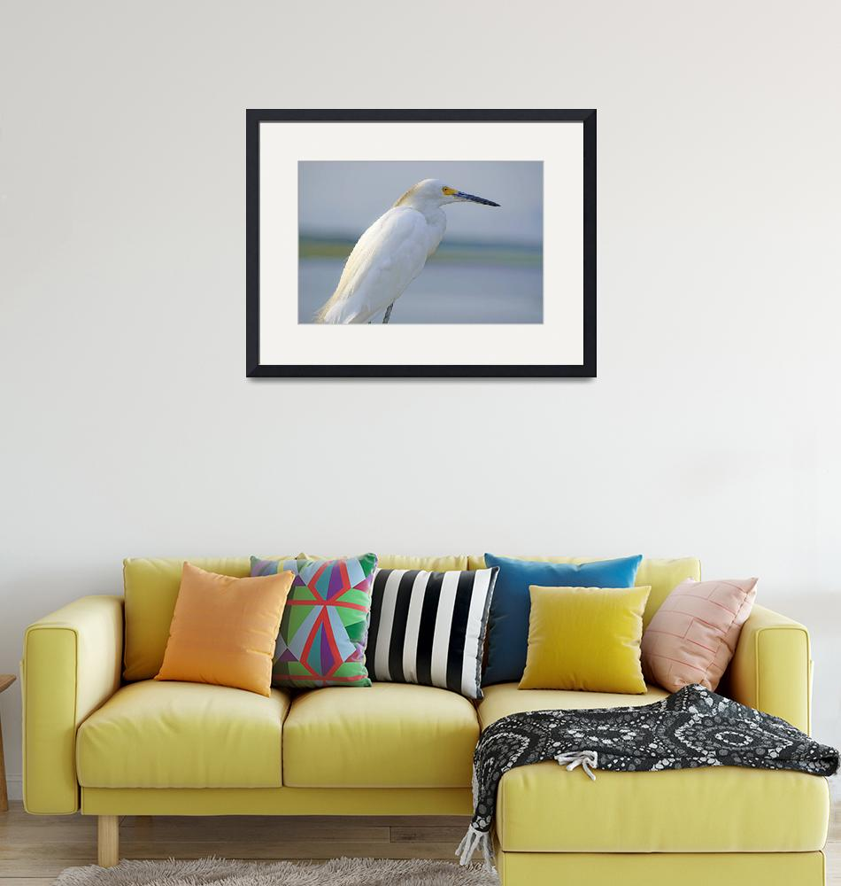 """""""Snowy Egret Adult""""  (2009) by albink"""