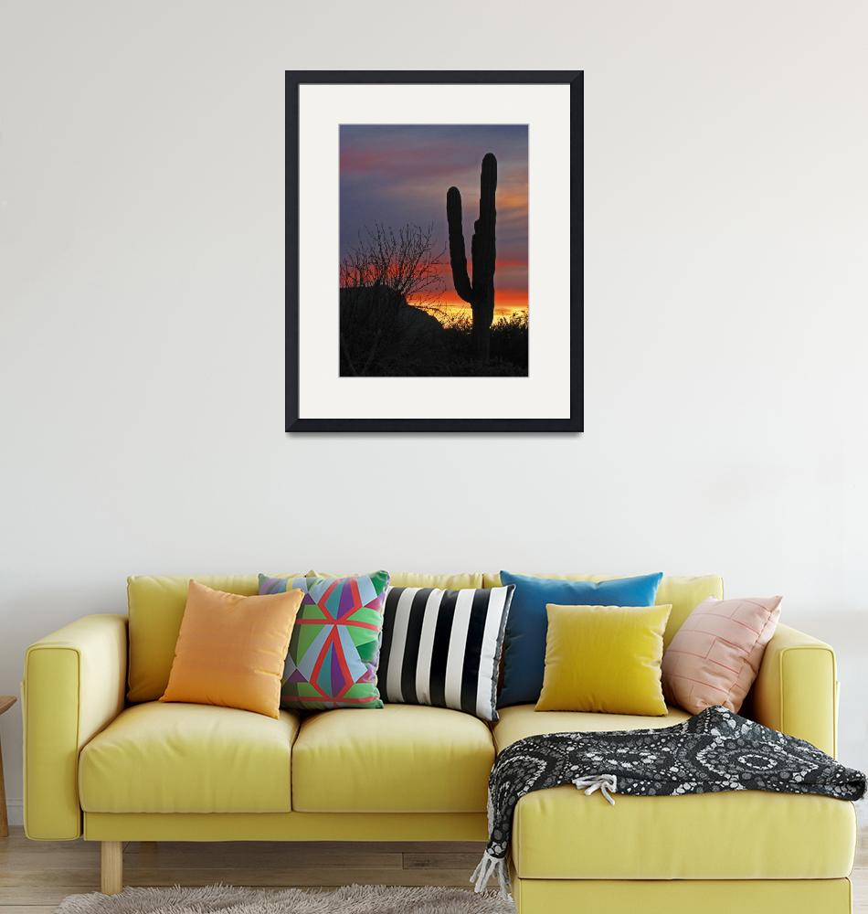 """Cactus at Sunset""  (2012) by almarphotography"