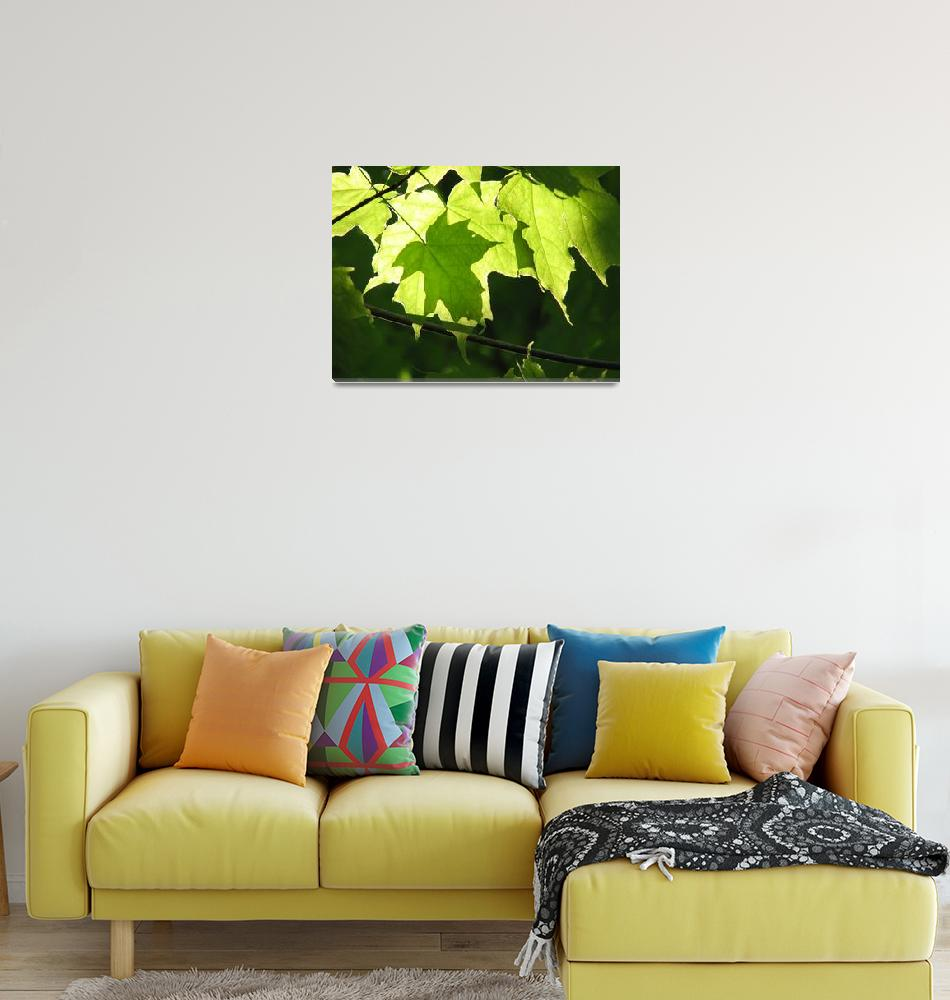 """""""Maples Leaves""""  (2011) by sojeo"""