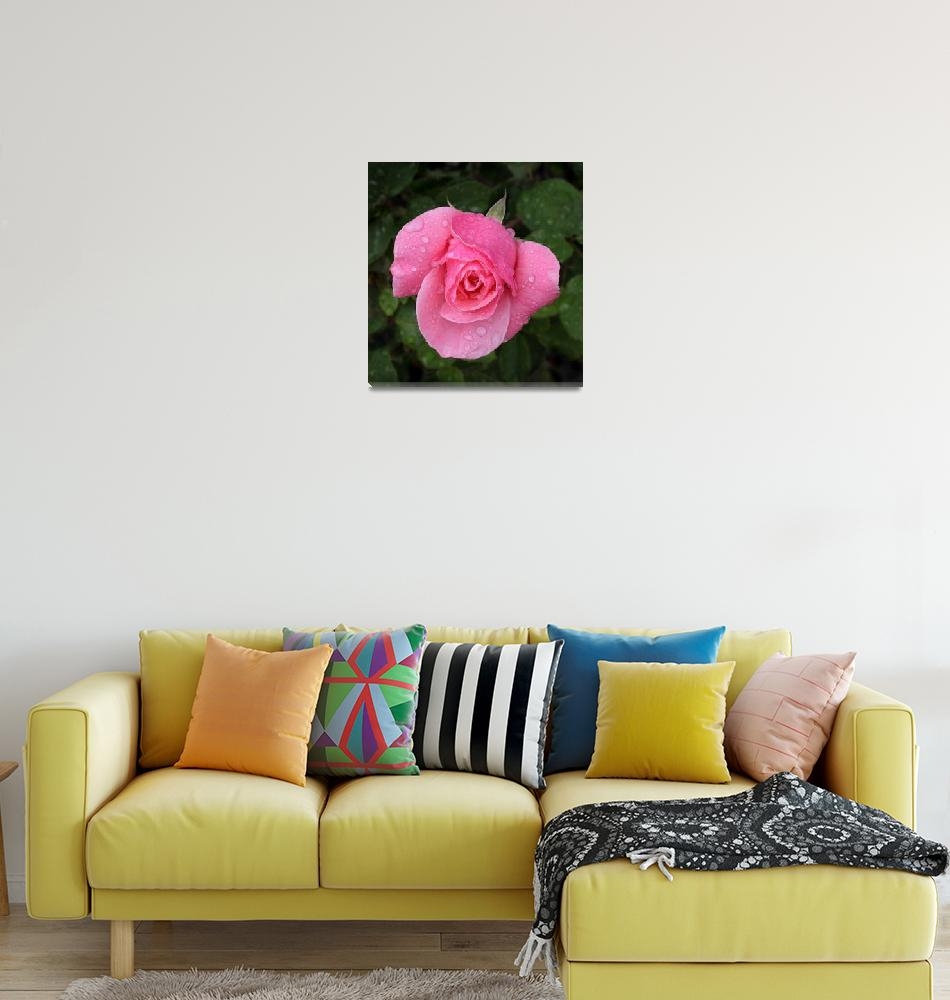 """Pink Rose with rain drops""  (2010) by digitalmedia"