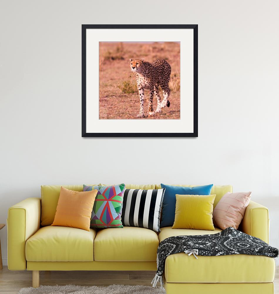 """""""Masai Mara Wildlife pictures""""  by TravelSync27"""