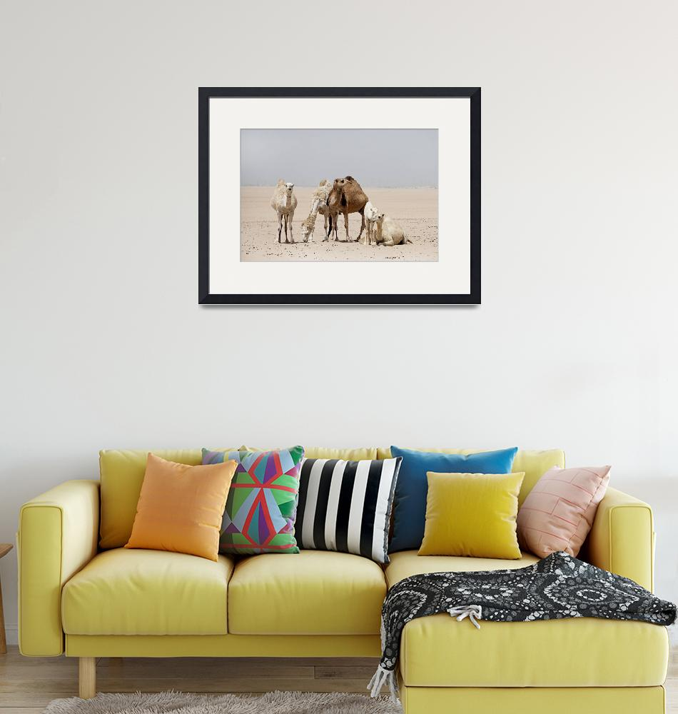 """""""Camels at Rest""""  (2013) by AlexisRosasco"""