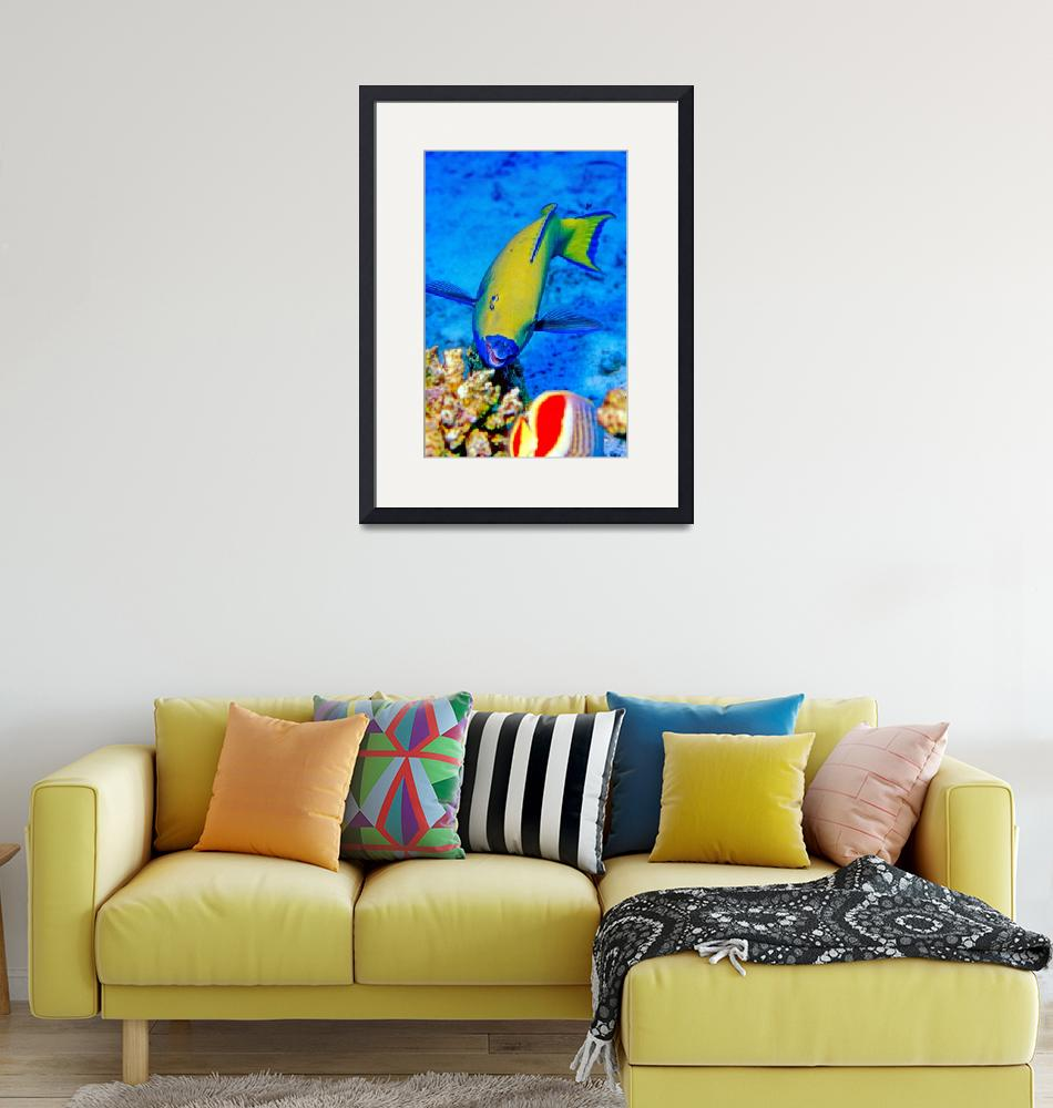 """Yellow Parrotfish""  (1992) by JoaoPonces"