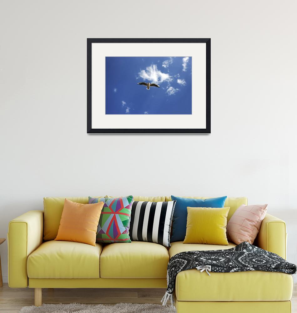 """""""White seabird flying and soaring in the blue air.""""  by Todikromo"""