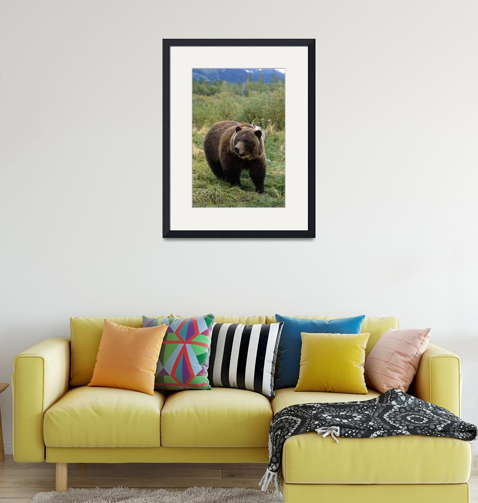 """Grizzly bear at the Alaska Wildlife Conservation C""  by DesignPics"