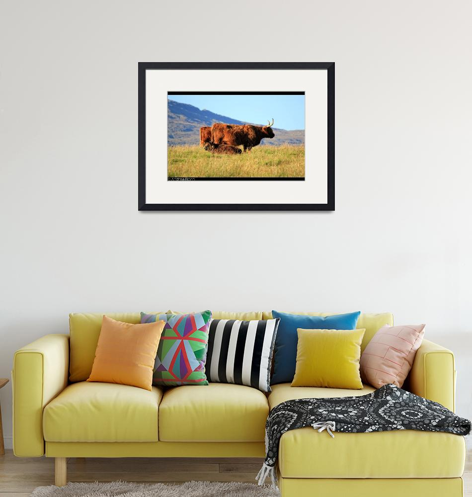 """""""Highland cattle""""  by and979"""