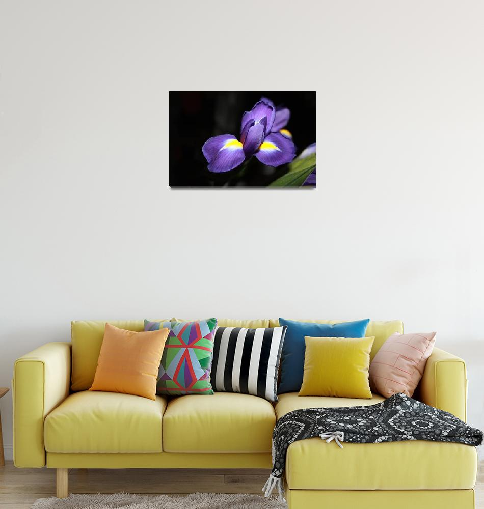 """""""20 Floral-Iris 1""""  (2008) by willifindunow"""