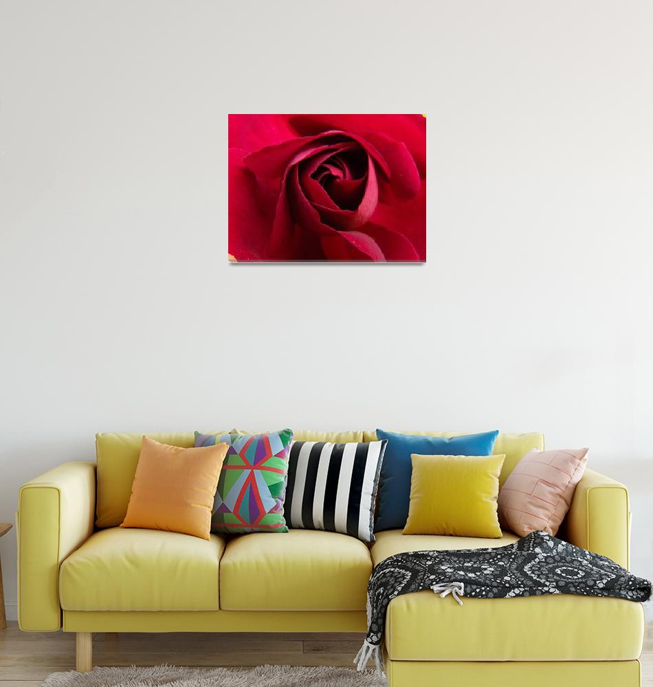 """""""Rose Middle""""  (2012) by Dzines"""