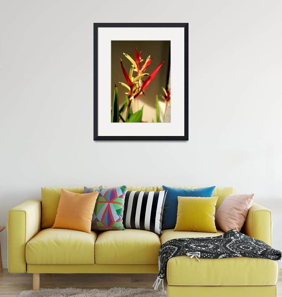 """""""Heliconia""""  (2009) by rayjacque"""
