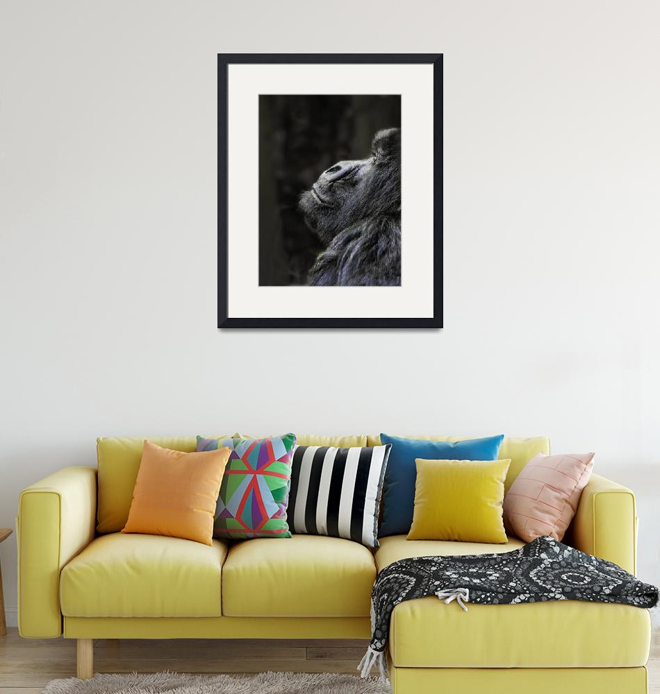"""""""Silverback at Ease""""  (2012) by mjphoto-graphics"""