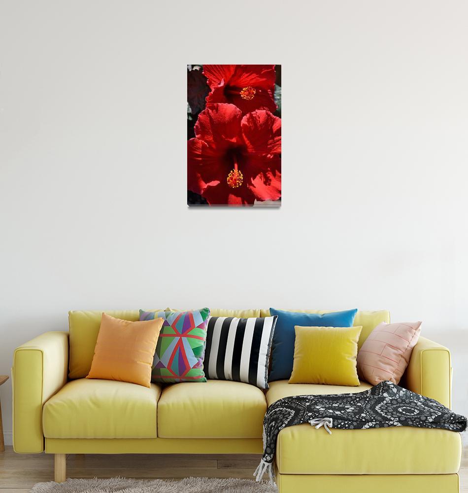 """Hibiscus Flowers""  (2011) by jodipflepsen"