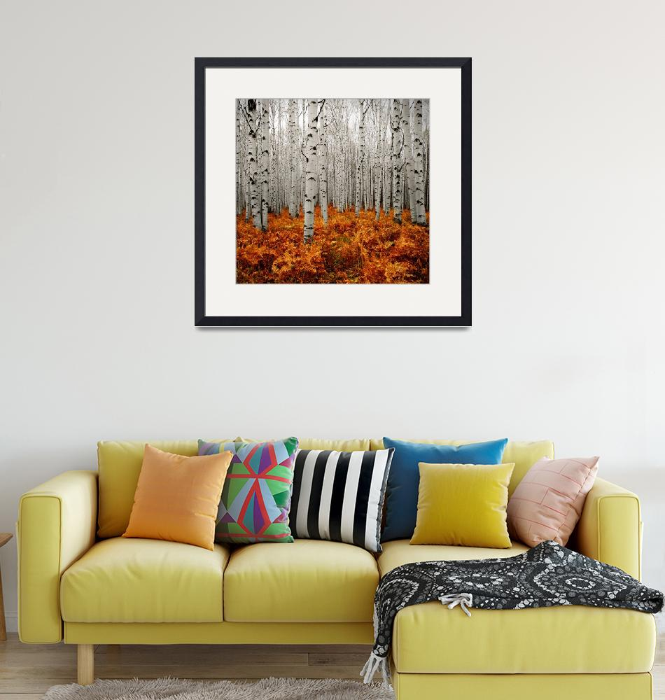 """""""Aspen Forest 2""""  by ccsg51"""