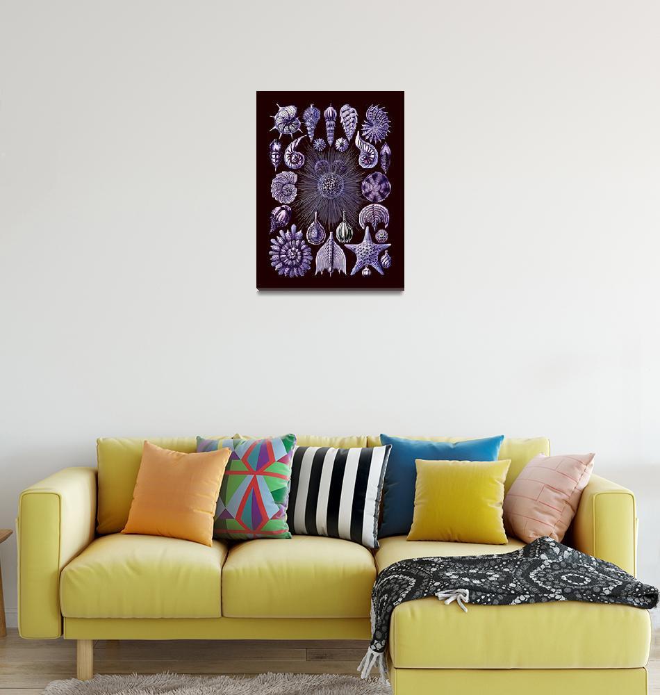 """Tiny Purple Shells Thalamophora""  (2016) by dianeaddis"