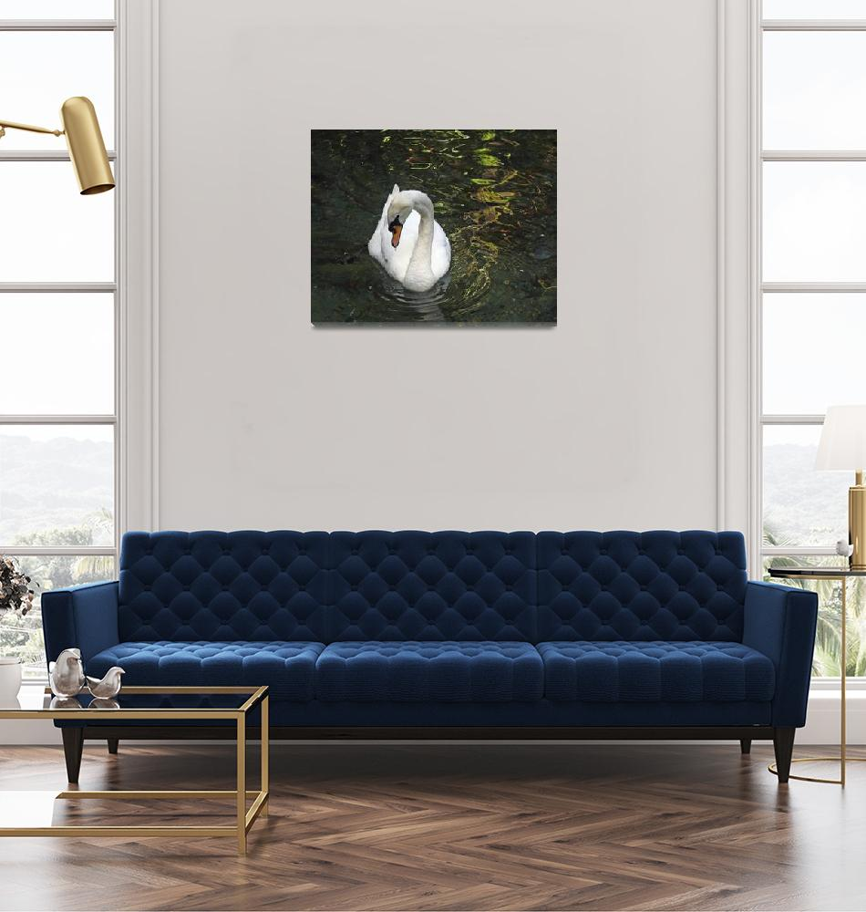 """""""Swan Drinking""""  (2008) by stockphotos"""