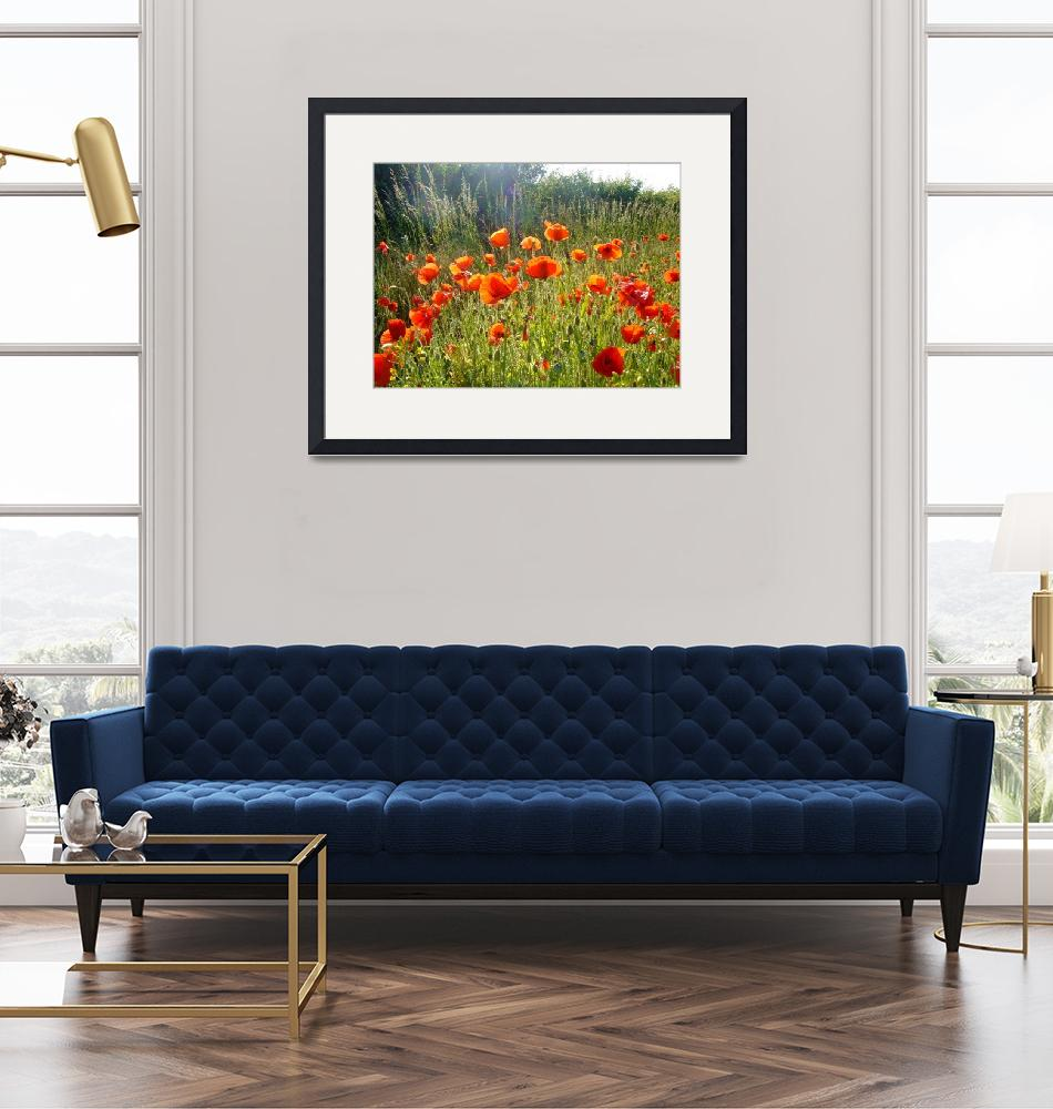 """""""Poppy field""""  (2009) by OooBabyBaby"""