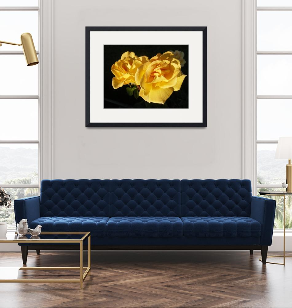 """""""Yellow Roses For My Flickr Friends!""""  by choirbell"""