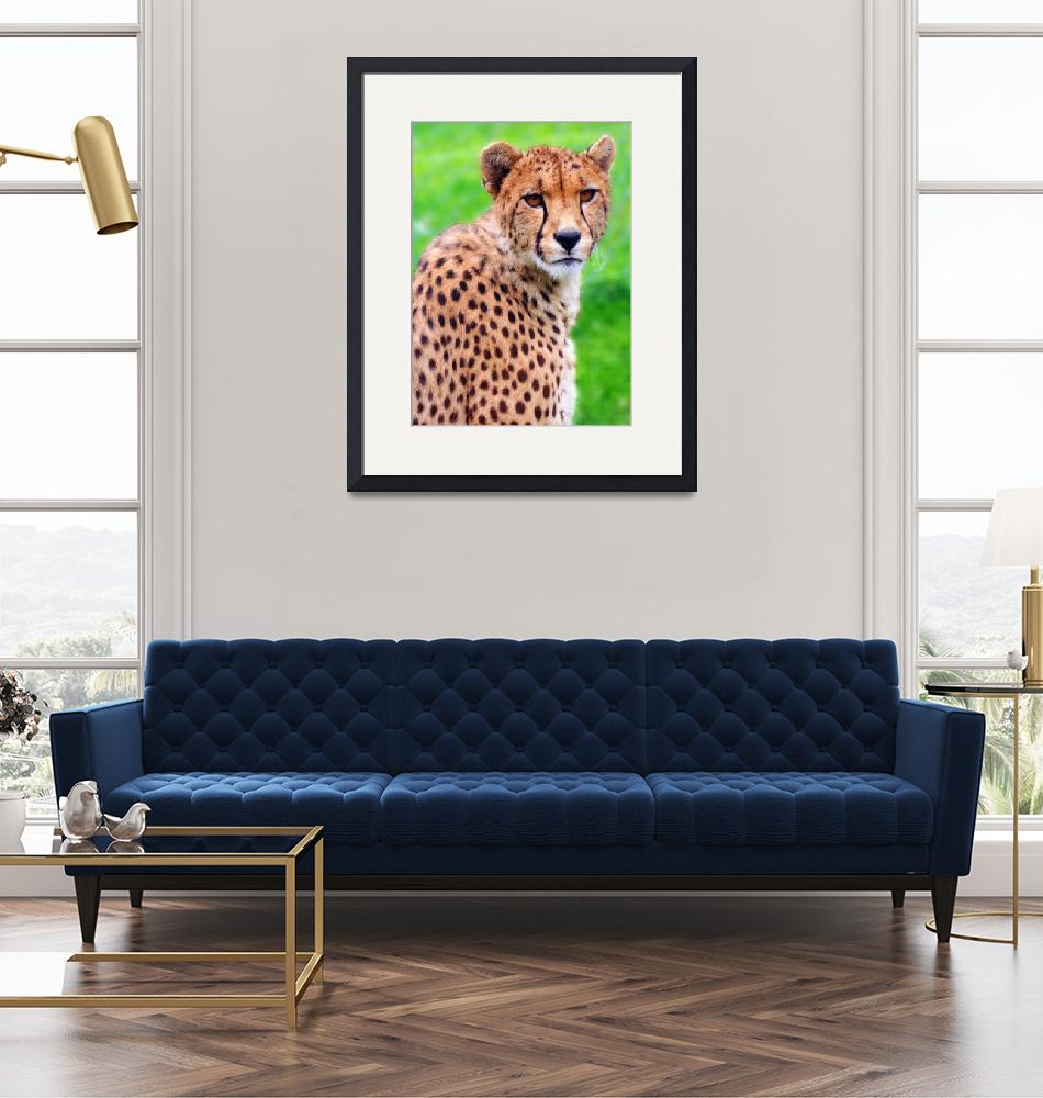 """""""THE DEPTH WITHIN A CHEETAH"""