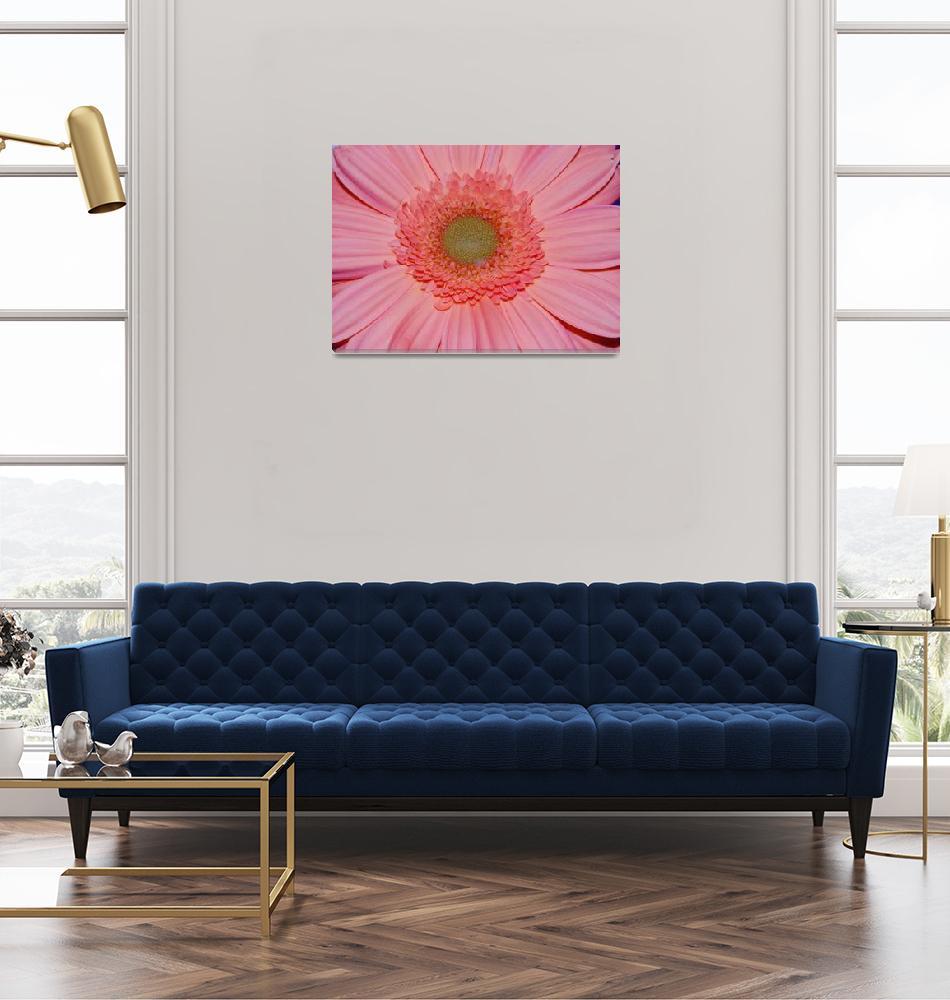 """pink daisy""  (2007) by AmyBarnerPhotography"