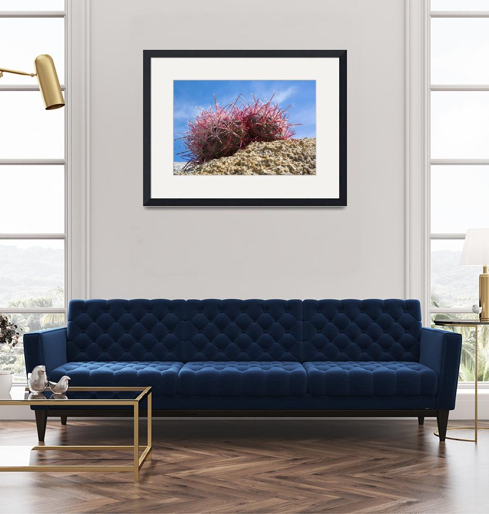 """""""Low-Angle View Of Barrel Cactus On Rocky Ground""""  by Panoramic_Images"""