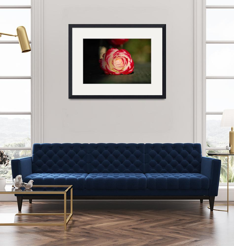 """Rose on a Table""  (2008) by davidearljohnson"