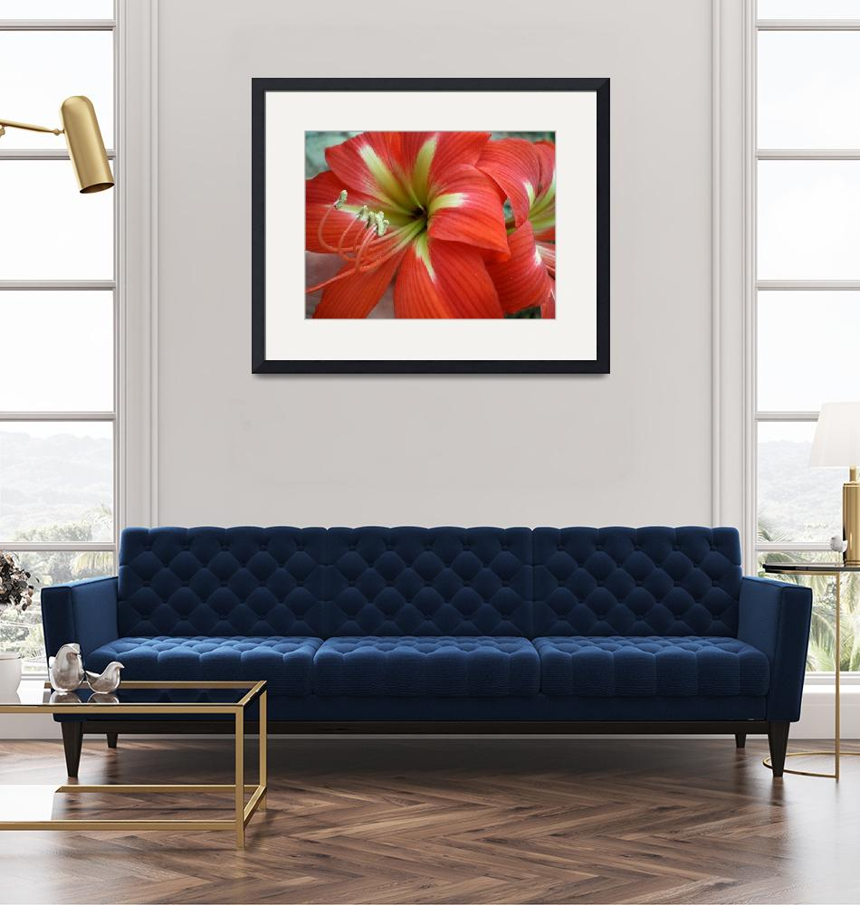"""""""Red Day Lilly"""" (2008) by HerbDickinson"""