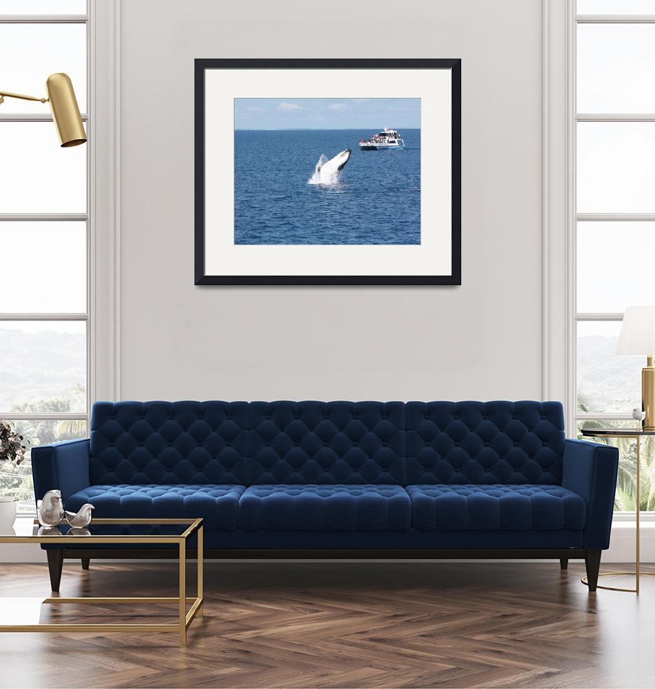 """""""NaP_ Whale Watching168a""""  by nevilleprosser"""