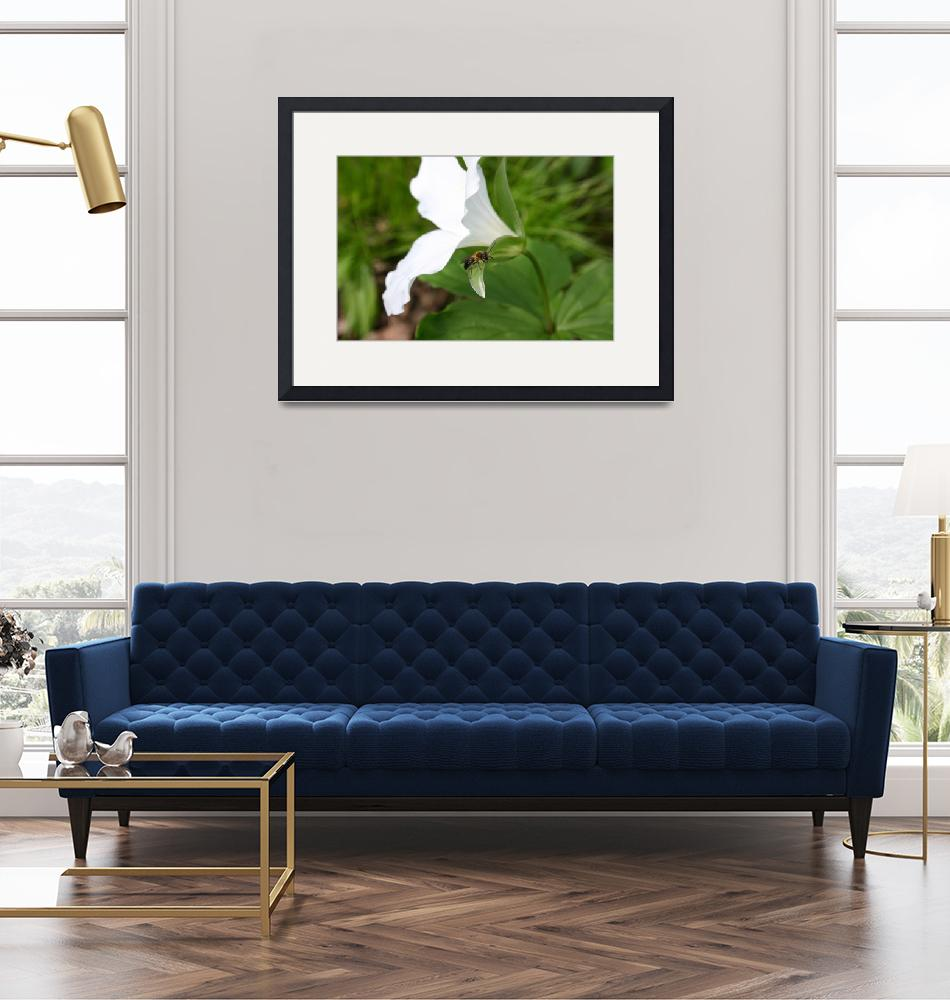 """""""Trillium and Bee""""  (2009) by AlyceTaylor"""