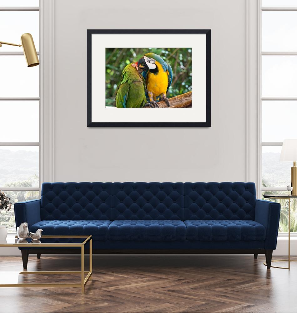"""""""Green, Blue and Gold Birds - Macaws in  Love""""  (2010) by mjphoto-graphics"""
