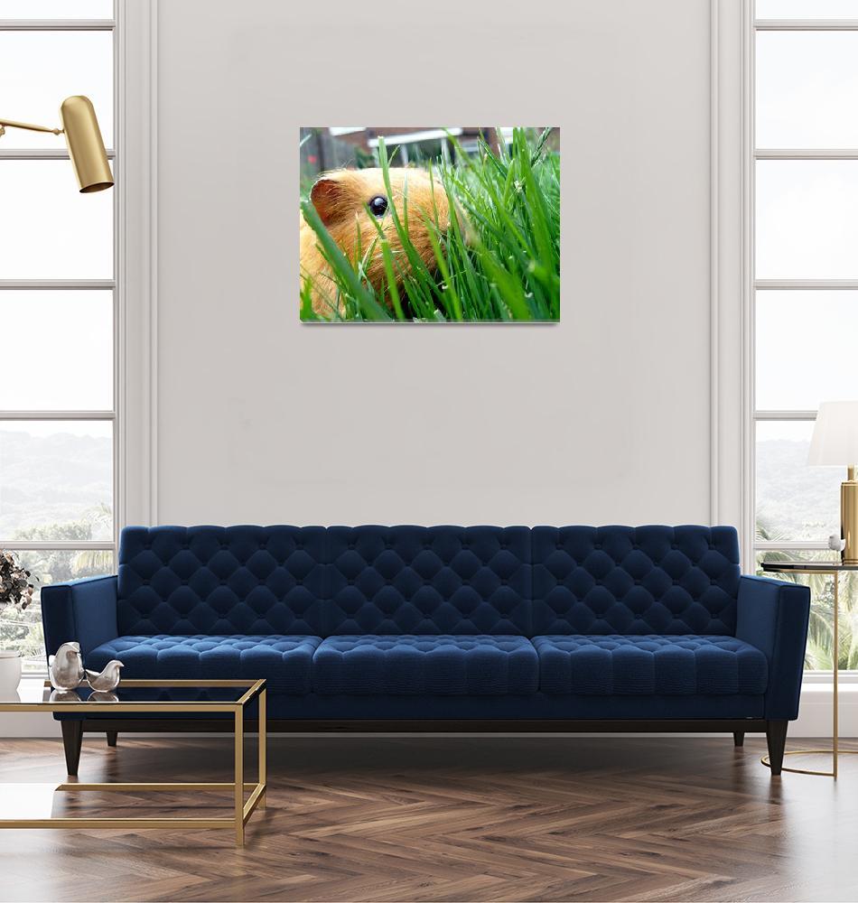 """Guinea Pig in the grass""  (2010) by spikemu"