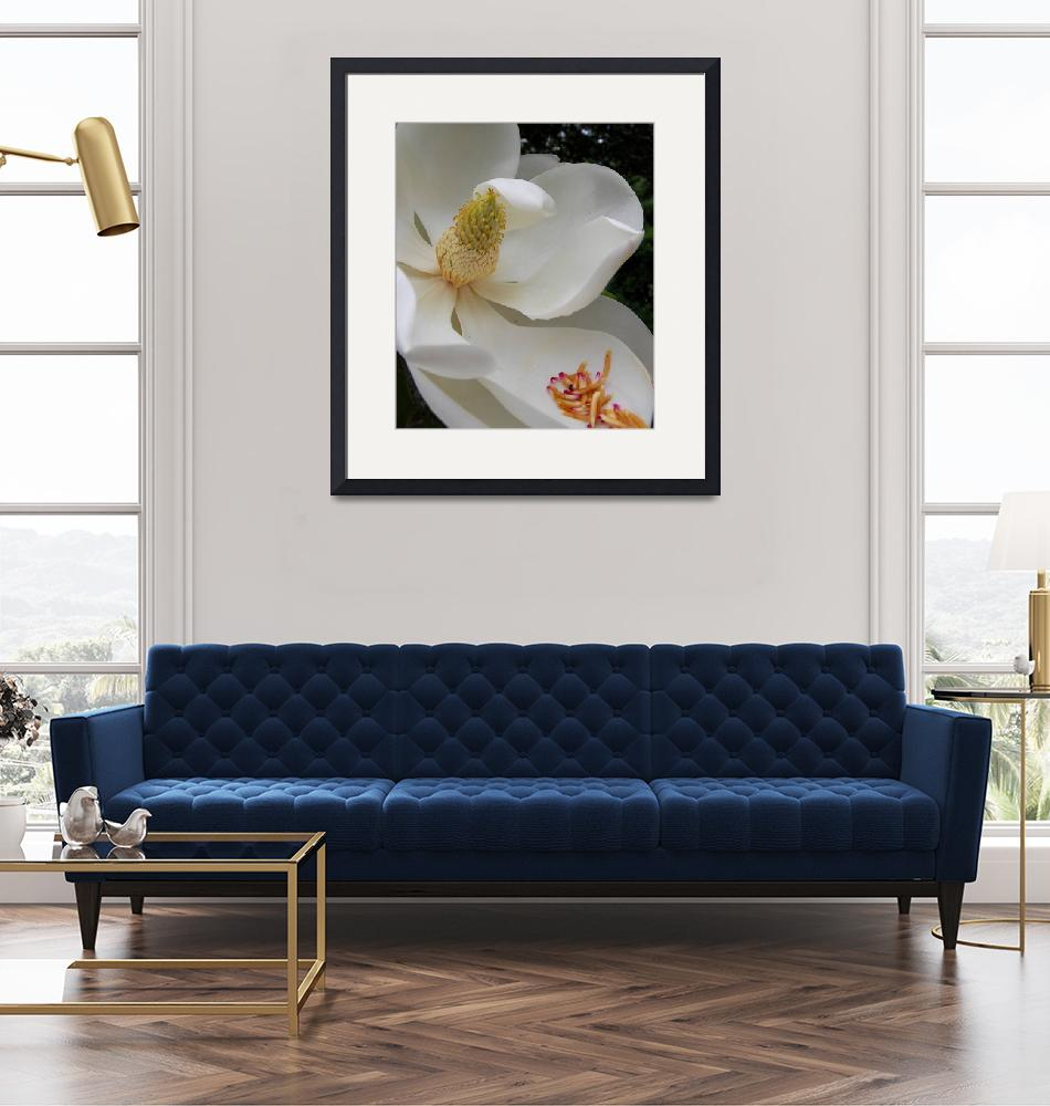 """""""Southern Magnolia""""  (2008) by knotaway"""