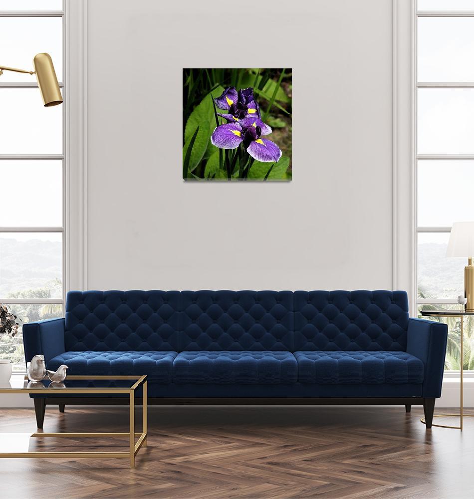 """""""Iris Colourwash""""  (2009) by northdevonfocus"""