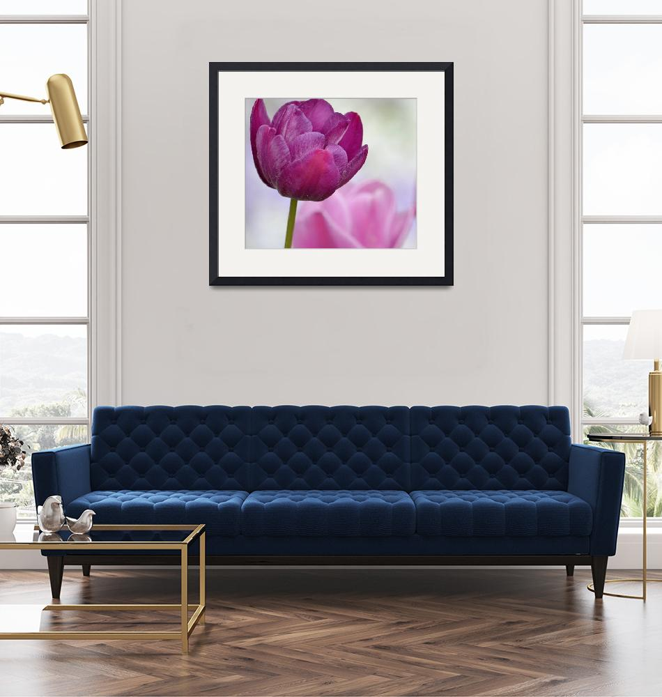 """""""Puple and Pink Tulips""""  (2014) by joanhan"""