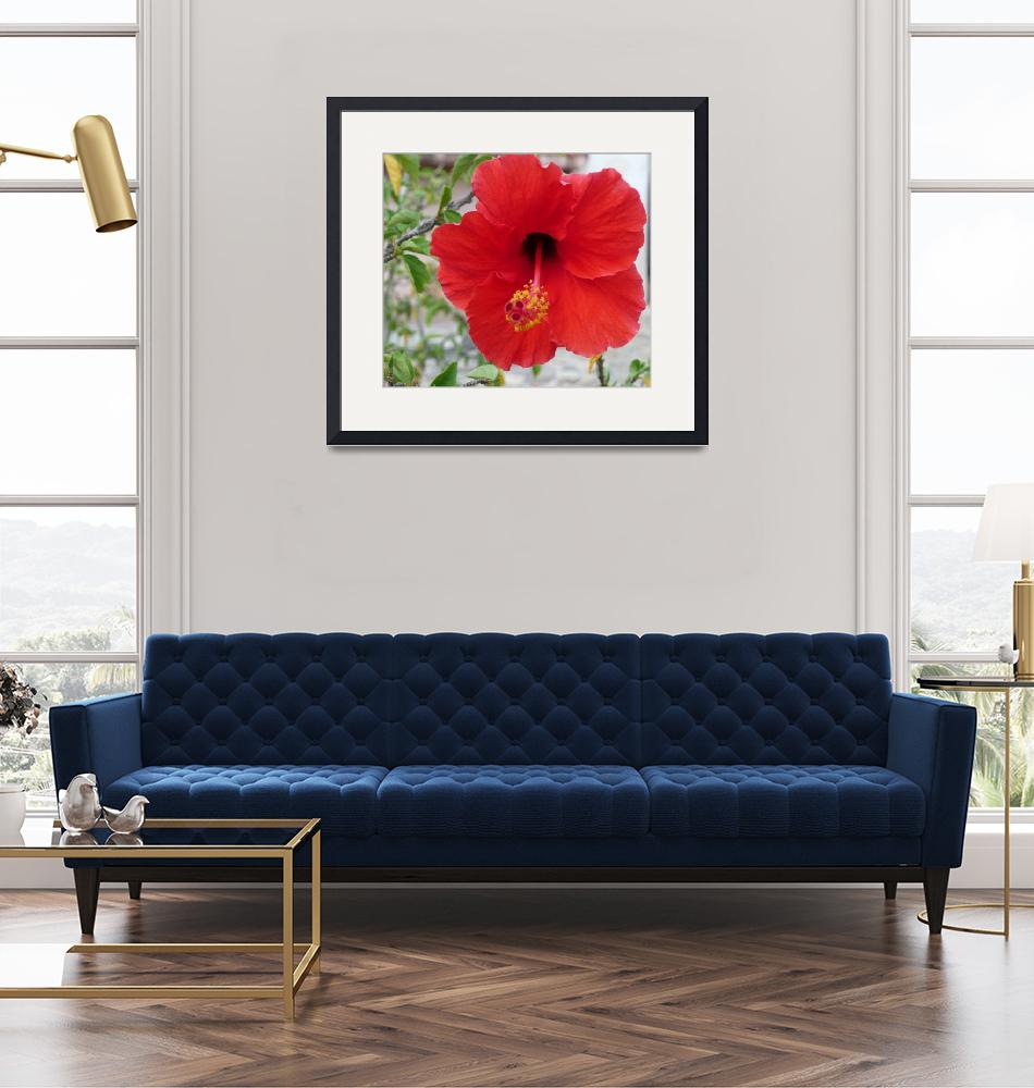 """""""Red Hibiscus""""  (2017) by photographybydonna"""