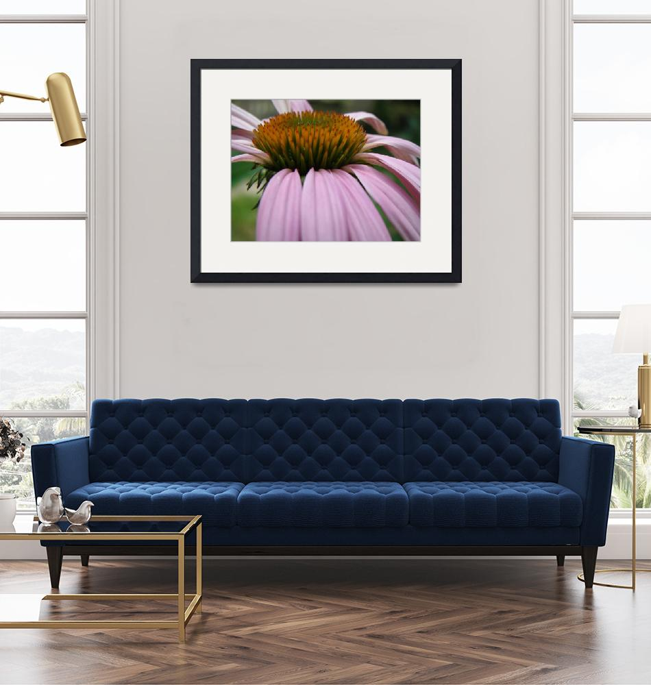 """""""first coneflower of 2008""""  by ashlie_conway"""