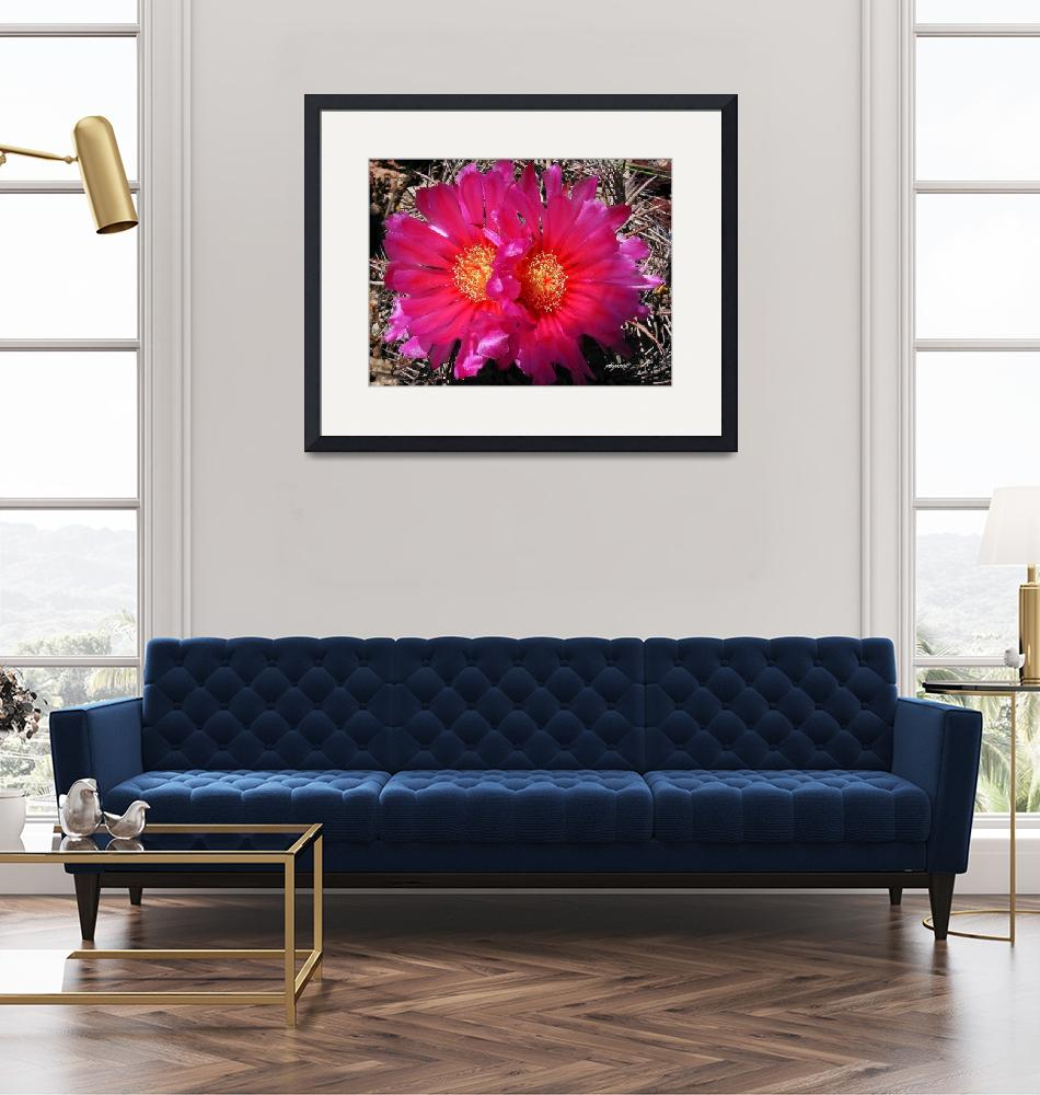 """""""Candy Barrel Cactus""""  (2008) by pbycraftphotography"""