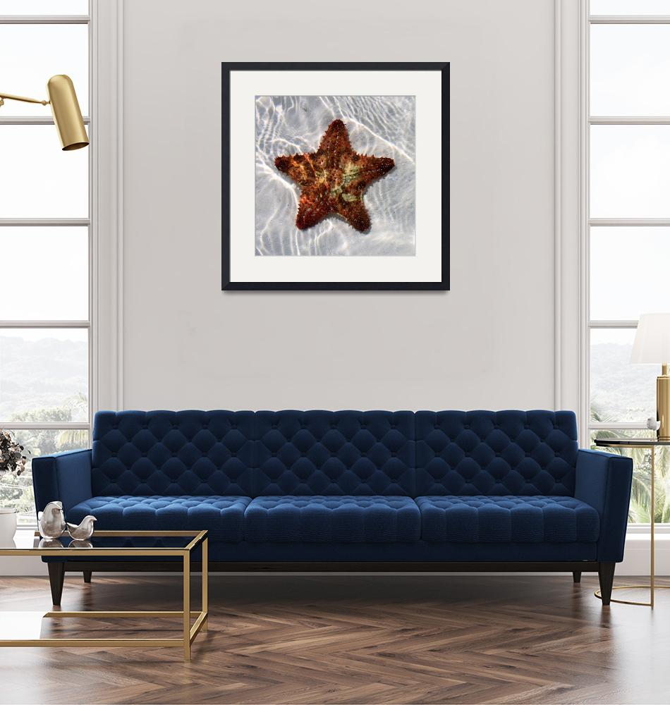 """""""Starfish""""  (2011) by Laura_Collins"""