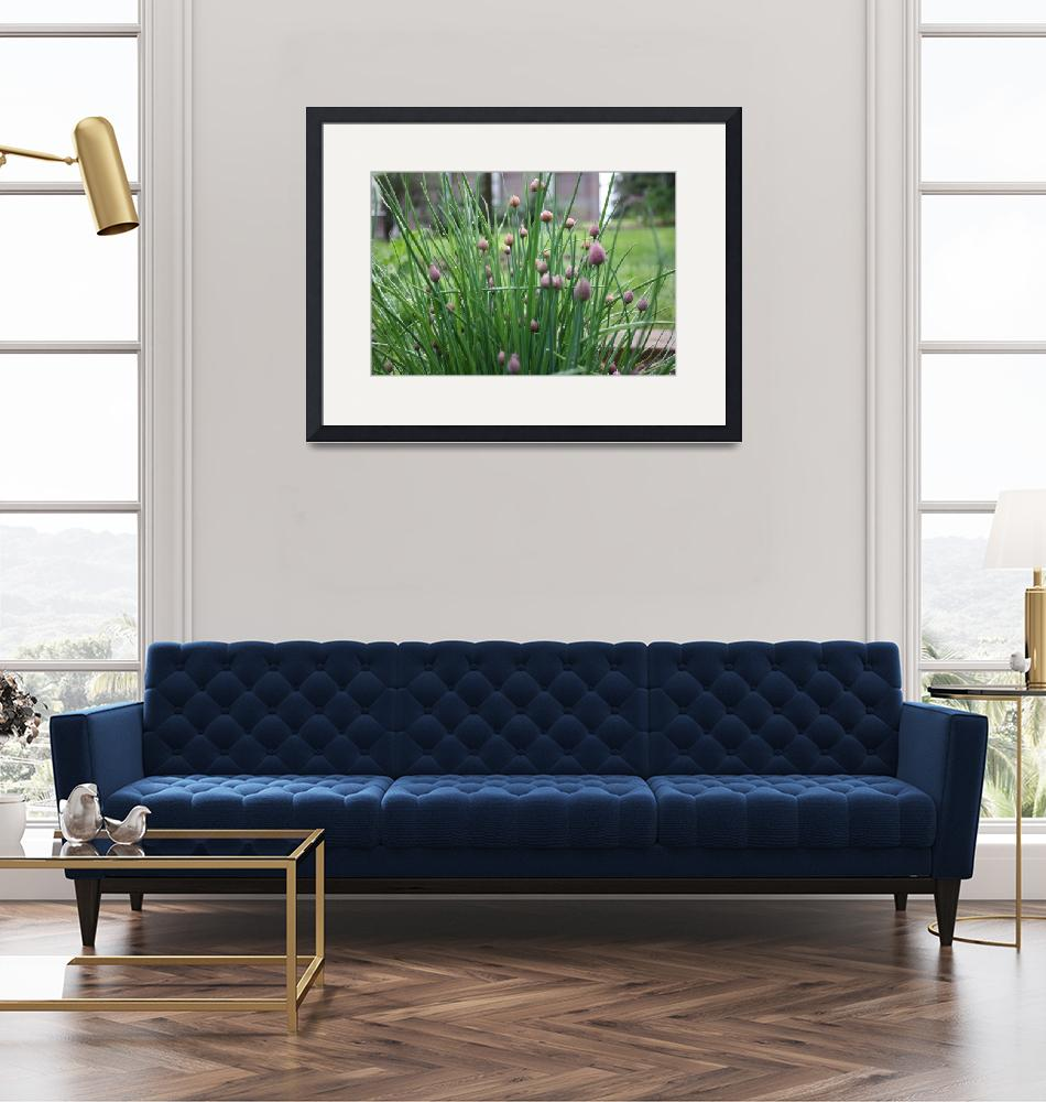 """""""Chives blooming""""  by jayritter"""