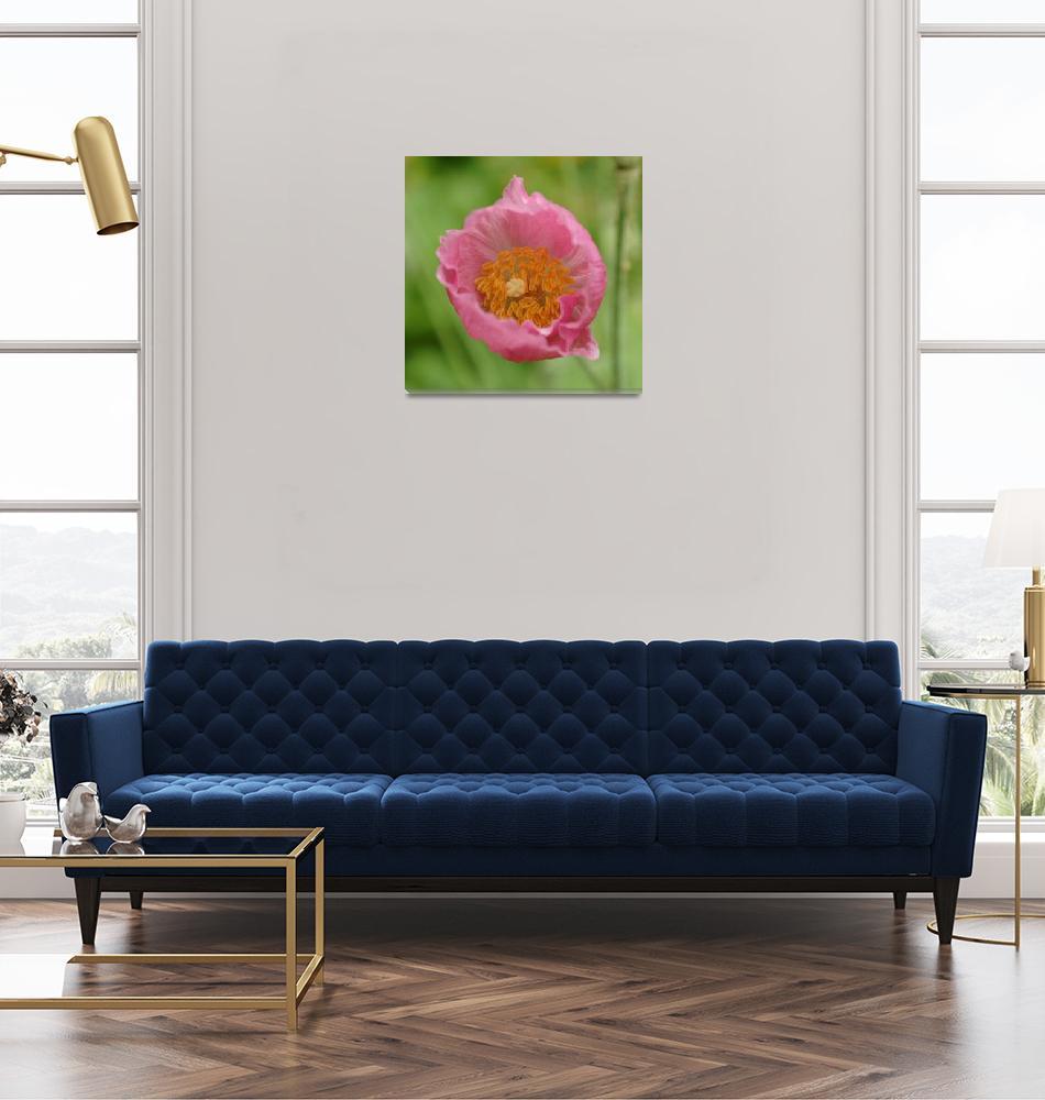 """Flowering Nepal Poppy""  (2014) by AdrianWale"