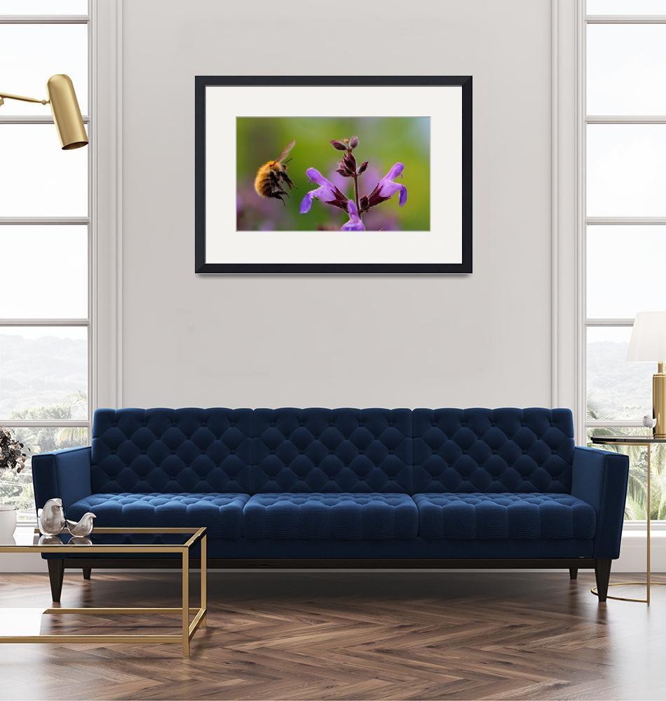 """""""Bumbling Bee""""  (2009) by JHawkins"""