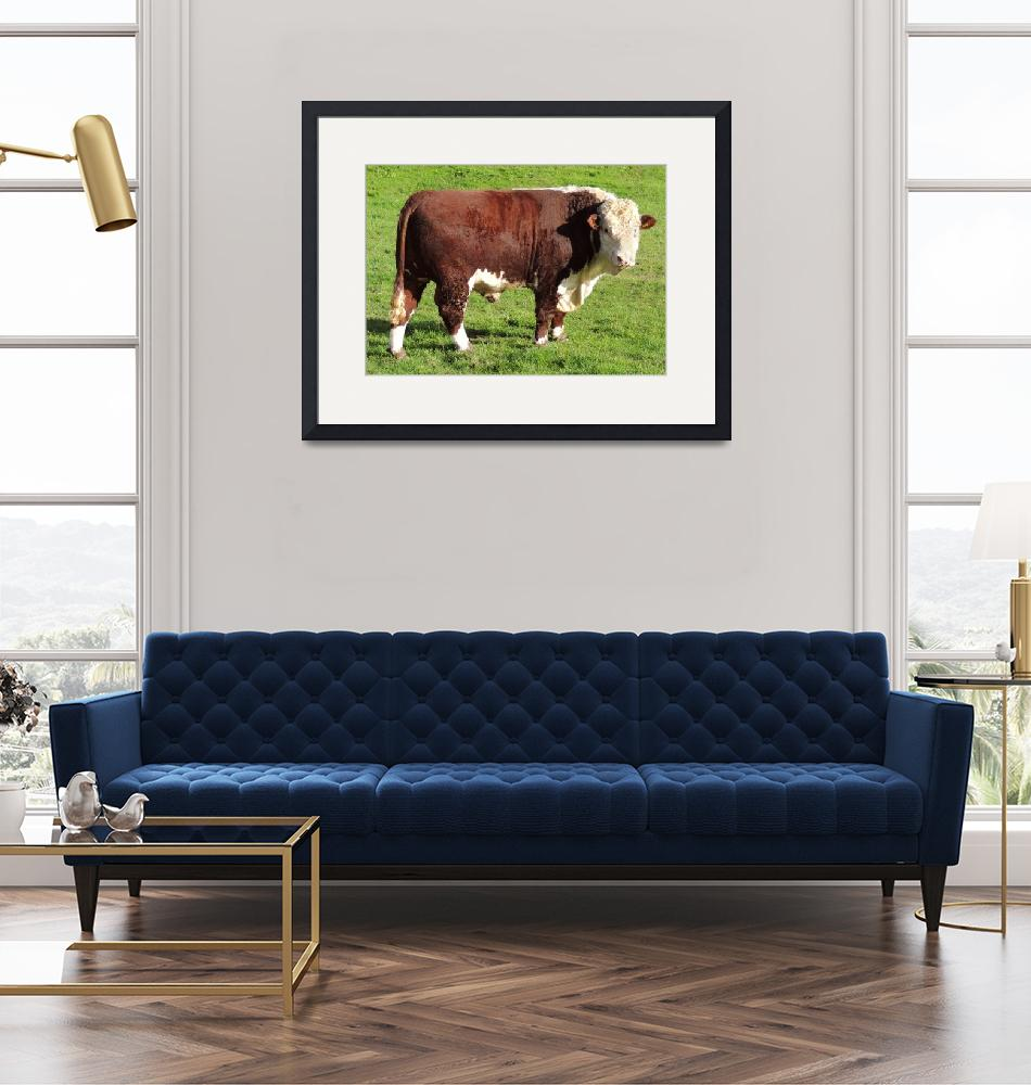 """""""Pedigree Hereford Bull""""  (2013) by JMcCoubreyPhotography"""