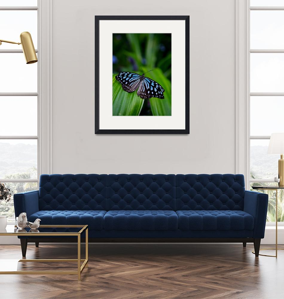 """""""Butterfly Show 20""""  by ChrisThompson"""