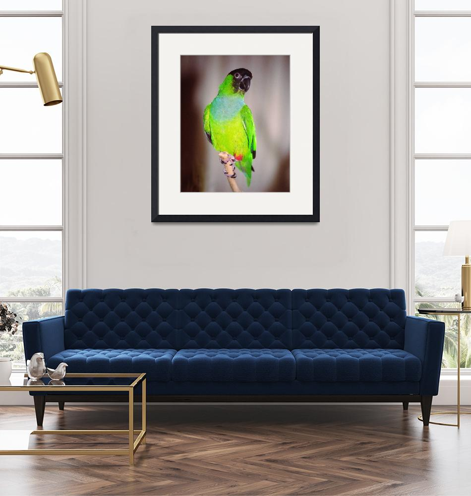 """Nanday Conure""  (2007) by buffaloworks"