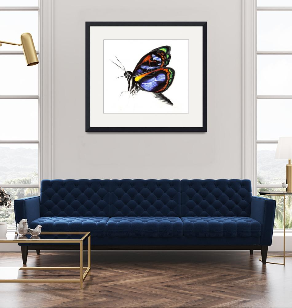 """""""Butterfly""""  by francissmith"""