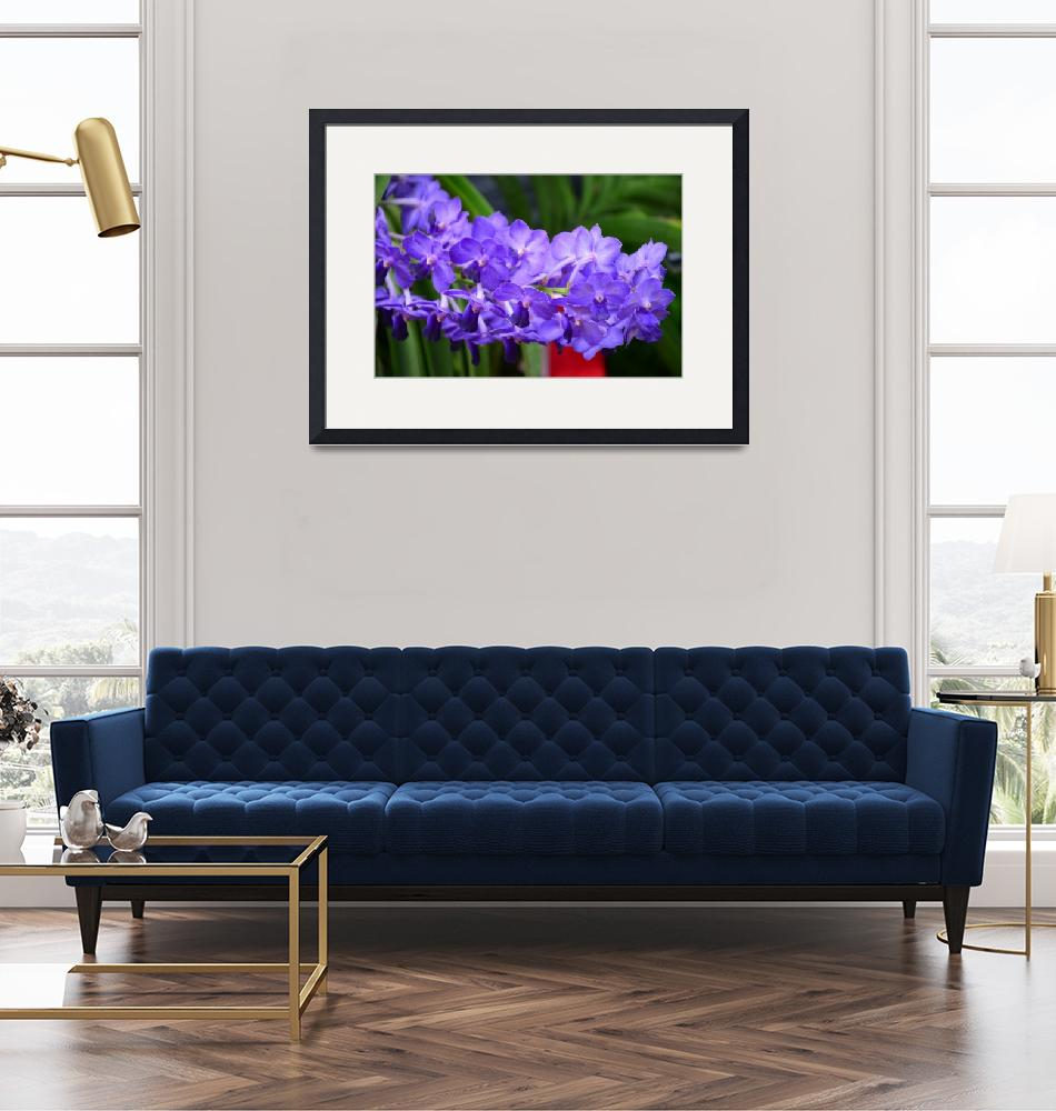 """""""The view of the violet flowers""""  (2018) by danieltoryfter"""