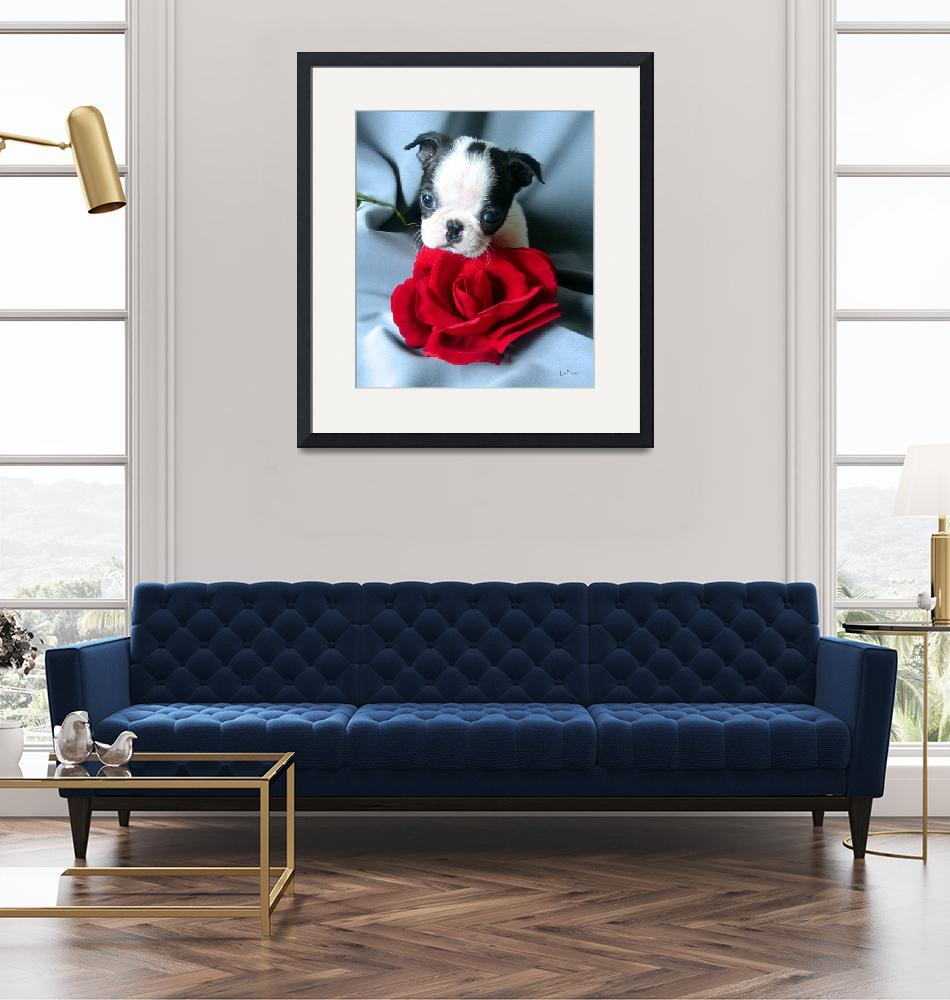 """Boston Terrier with Red Rose""  (2002) by ACuteProduction"