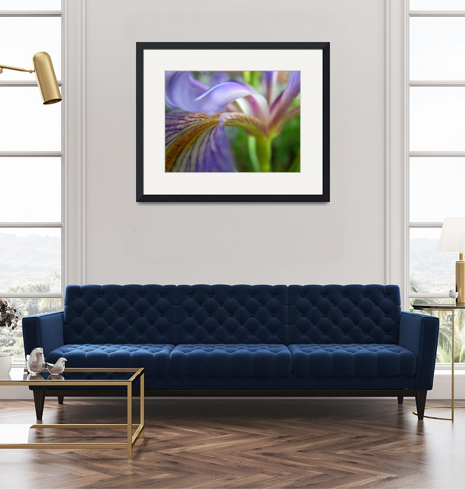 """Purple Iris in Motion""  (2008) by knotaway"
