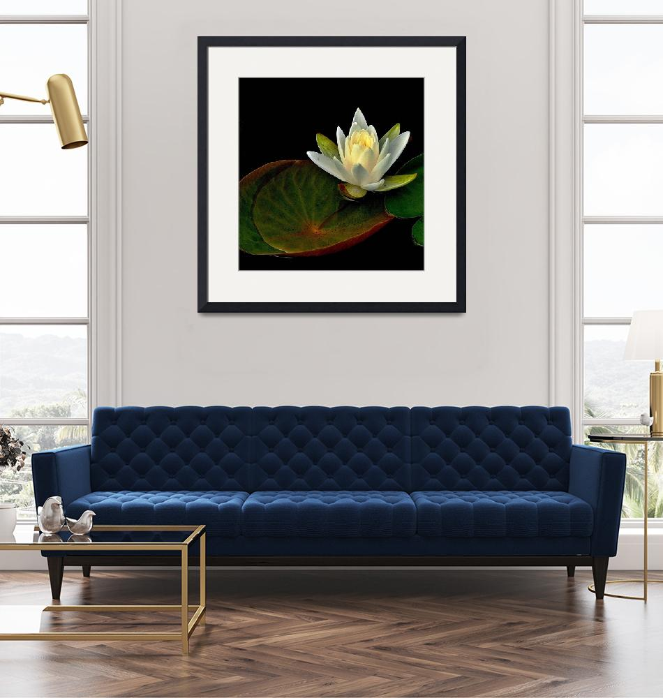 """Water Lily""  (2011) by bavosiphotoart"